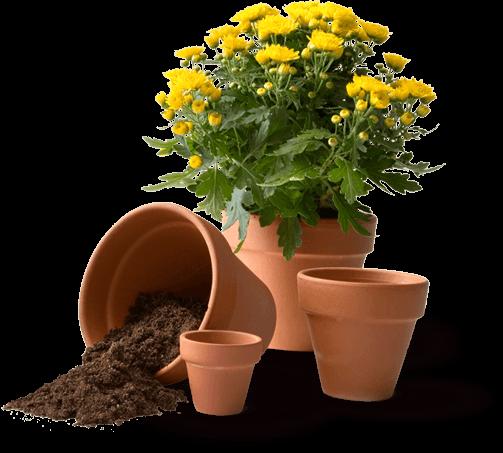 Töpfe mit Erde und Pflanze Gartengeheimnisse