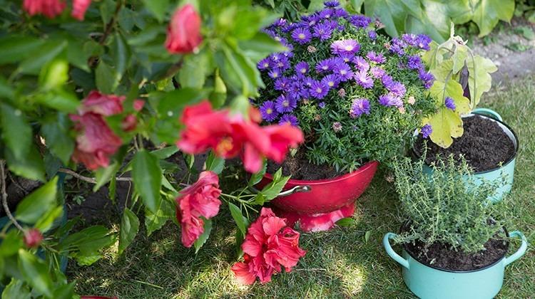 Altes Geschirr als Blumentopf