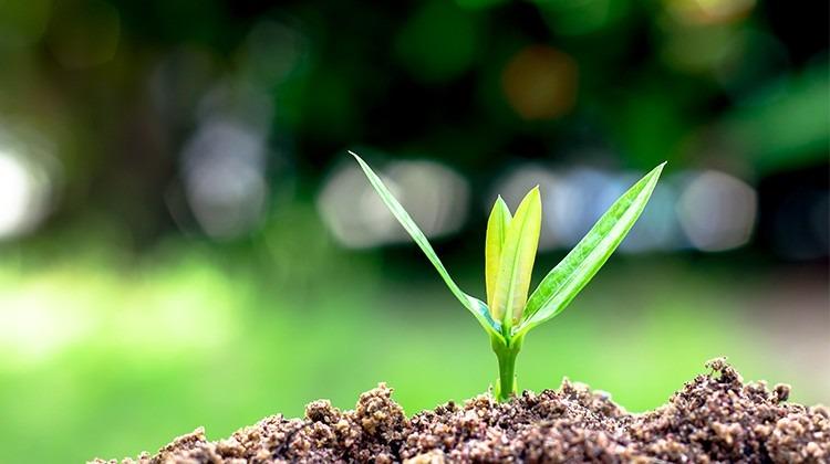 Kleine Pflanze wächst © Getty Images