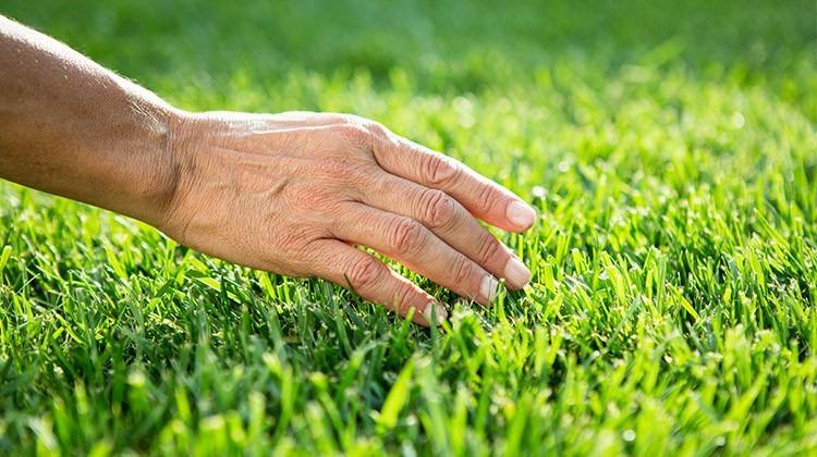 Hand streicht über Rasen