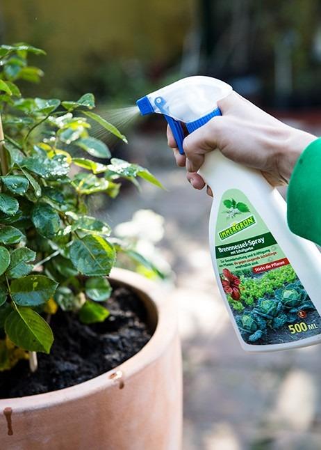 Brennnesselspray hilft gegen Blattläuse