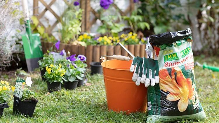 Immergrün Blumenerde und viele Pflanzen im Garten