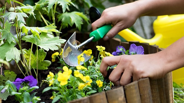 Einsetzen von Blumen im Beet