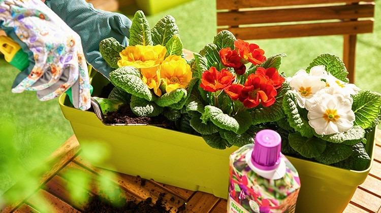 Blumen im Balkonkisterl