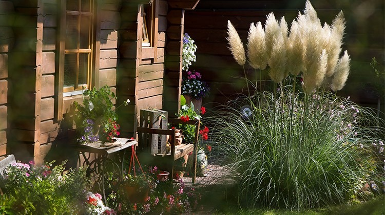 Gräser bei Gartenhütte