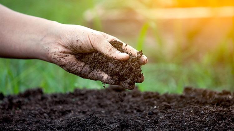 Erde im Garten © GettyImages