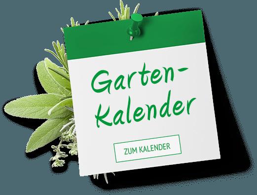 Gartenkalender Kräuter