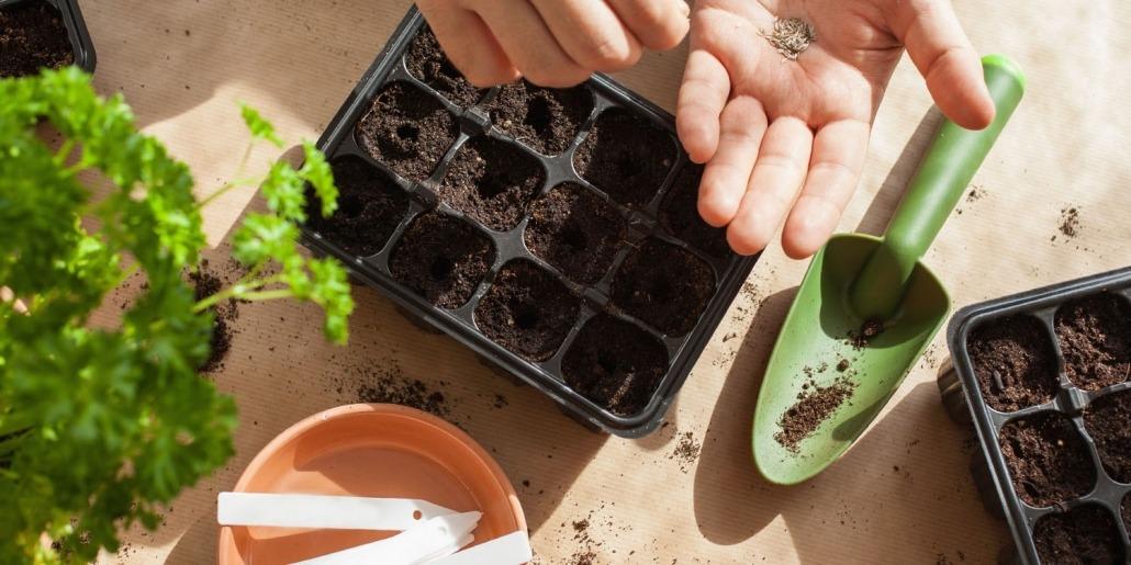 Samen in Anzuchtschalen geben - © GettyImages