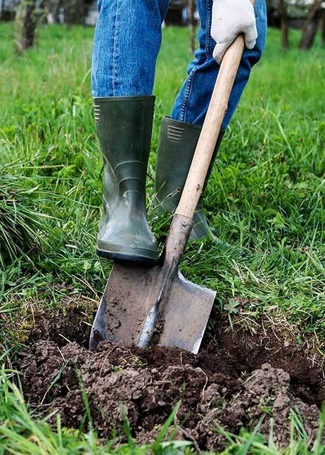 Ausheben eines Pflanzloches vor dem Umsetzen © GettyImages