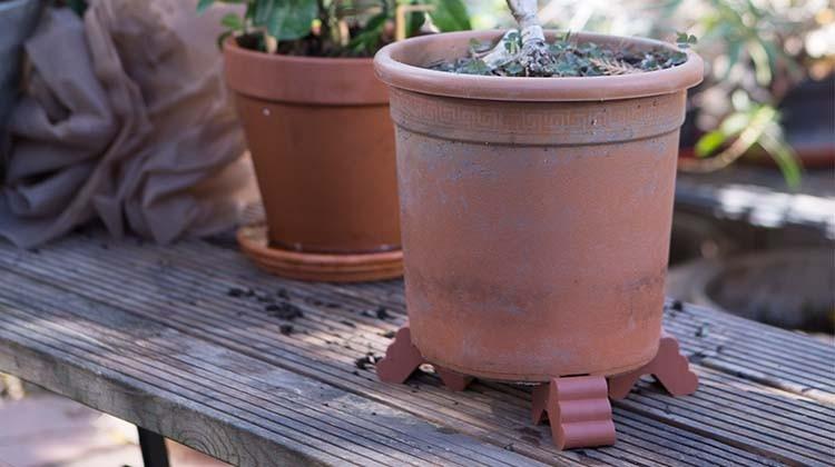 Füßchen helfen Kübelpflanzen beim Überwintern