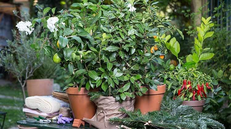 Pflanzen auf einem Tisch
