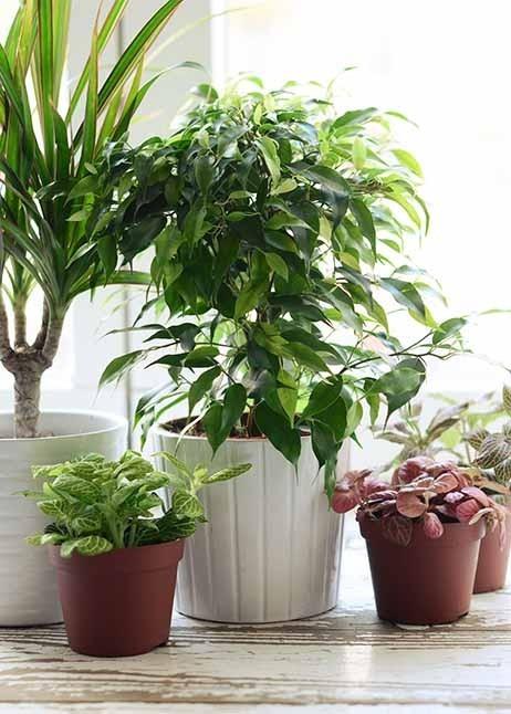 Verschiedene Zimmerpflanzen © GettyImages