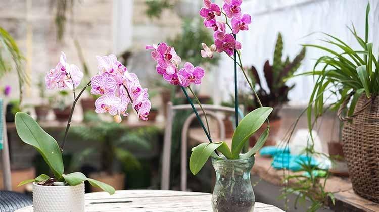Orchideen auf einem Tisch © GettyImages