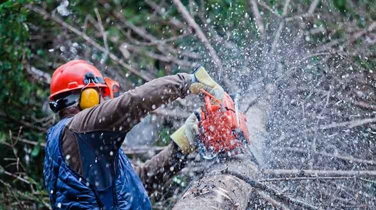 Gartenpflege im Winter - Baum fällen © GettyImages
