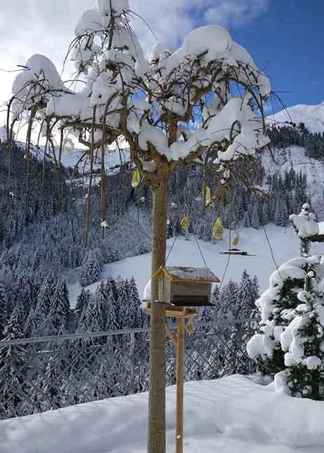 Gartenpflege im Winter - Baum mit Schnee © GettyImages