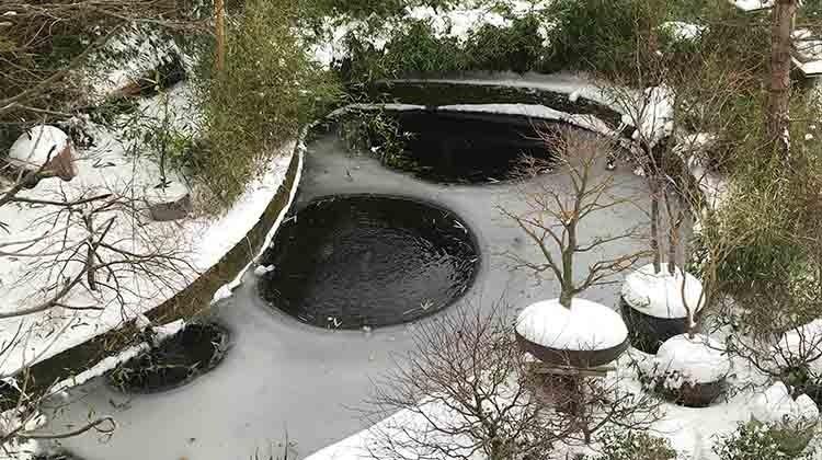 Gartenpflege im Winter - Teich © GettyImages