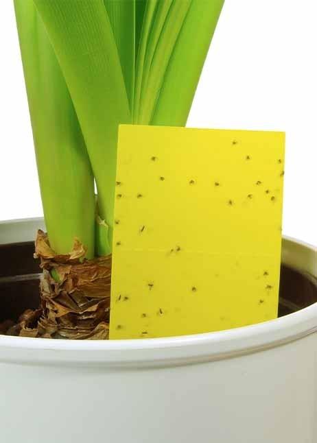 Gelbsticker zur Bekämpfung von Trauermücken