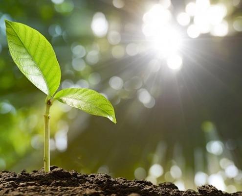 Pflanze, Anbau im Klimawandel © GettyImages