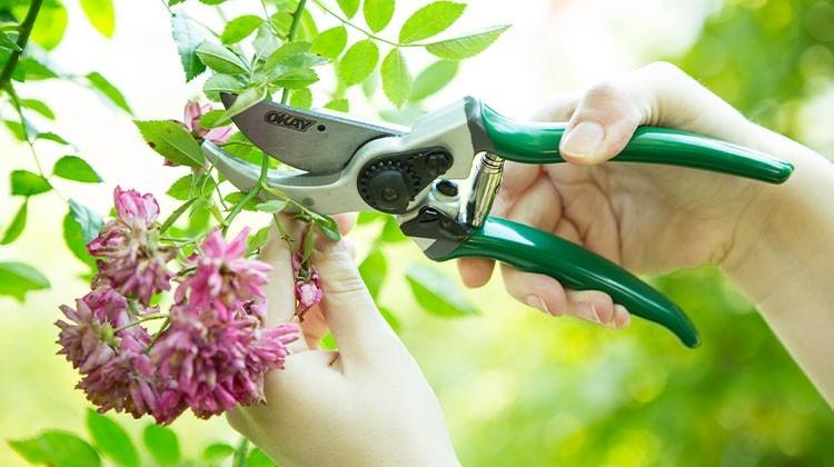 Die Gartenschere ist ein wichtiges Gartengerät