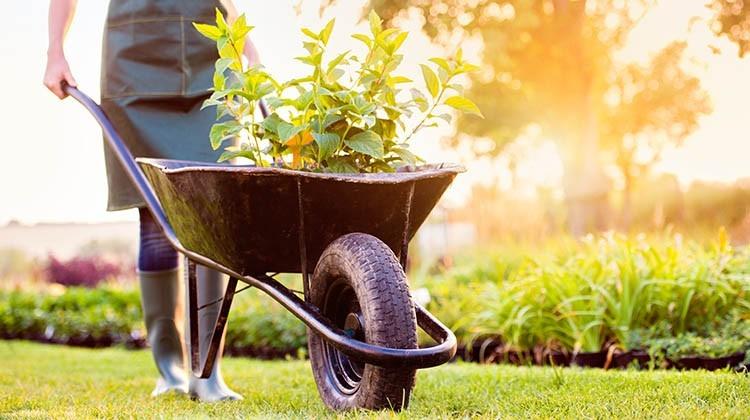 Schiebtruhe ein wertvollter Gartenhelfer