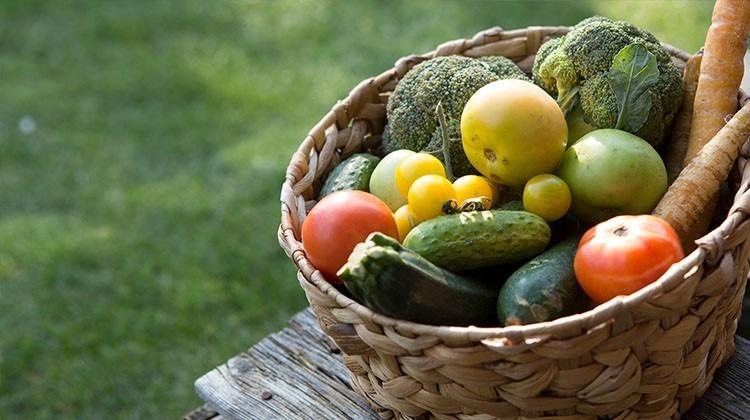 Obst- und Gemüseernte - Gemüsekorb