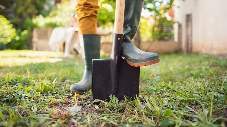 Trockenschäden im Rasen mit dem Spatentest © GettyImages